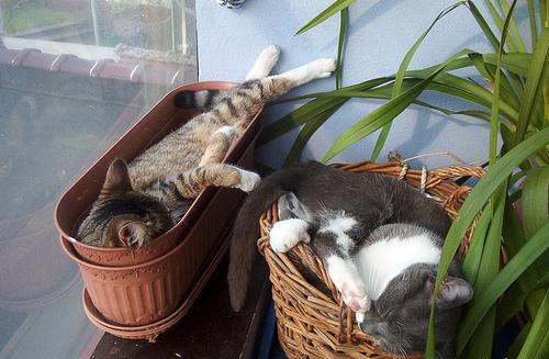 http://photo.gardenweb.ru/thumbs/lrg-229-cats.jpg